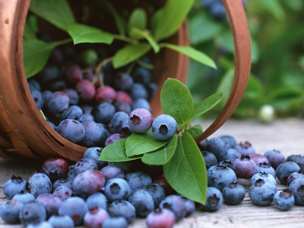 agel-see-bilberry