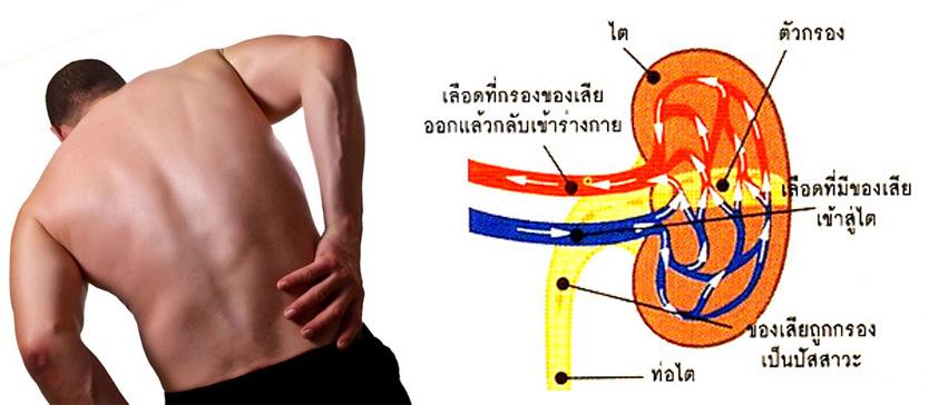 gelsociety-Kidney-Fucoidan-agel-umi-มะเร็ง-อาเจล-เอเจล-รักษา-ราคาถูก-ราคาสมาชิก-สมัครทำธุรกิจ-ไตเสื่อม-อูมิ-เบาหวาน-ajel-เบาหวาน